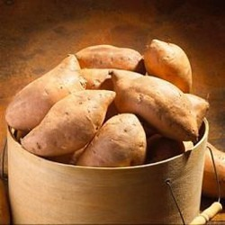 Wild Yam Breast Enhancement Herb